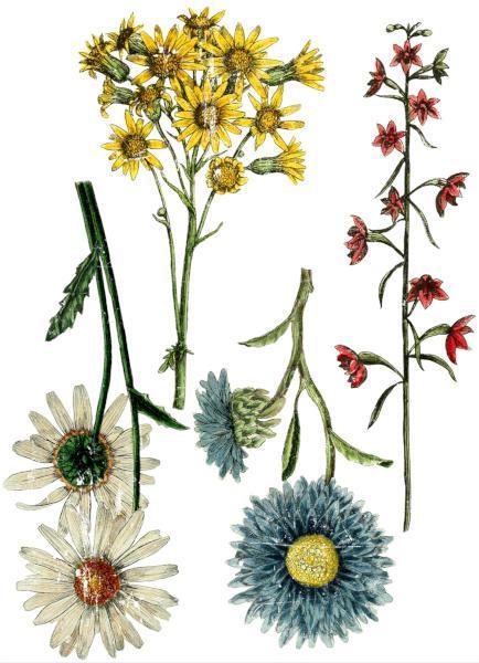Wild Flower Botanicals - My Shabby Chic Corner - Prodotti Iron Orchid Designs - IOD