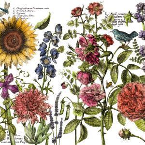 IOD DT Botanists Journal 24x33 300x300 - My Shabby Chic Corner - Prodotti Iron Orchid Designs - IOD