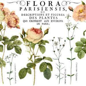 IOD DT Flora Parisiensis 24x33 2 300x300 - My Shabby Chic Corner - Prodotti Iron Orchid Designs - IOD