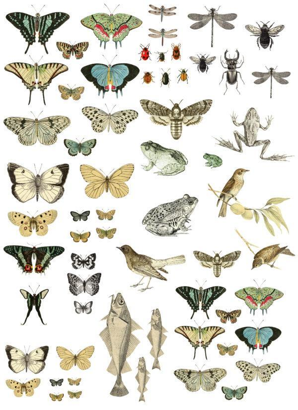 IOD DT Entomology Etcetera Preview DEC TRA ENT 600x825 - My Shabby Chic Corner - Prodotti Iron Orchid Designs - IOD